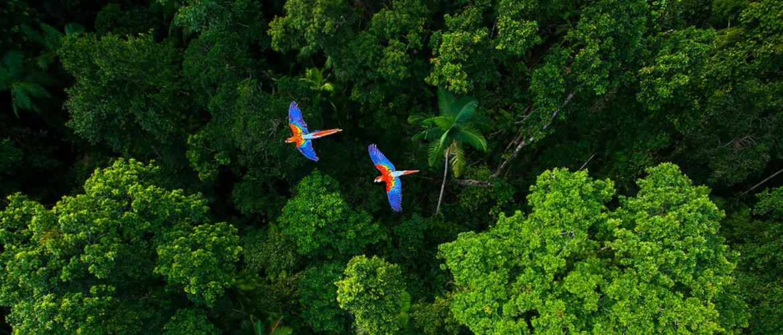 Proteger la selva reciclando consumibles con programa Brother Earth