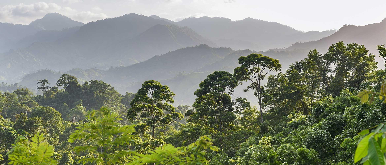 Bosque en Honduras