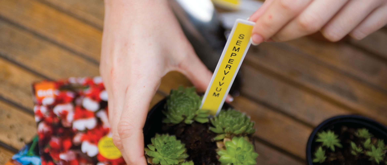 Etiquetas adhesivas Brother para viveros y plantas