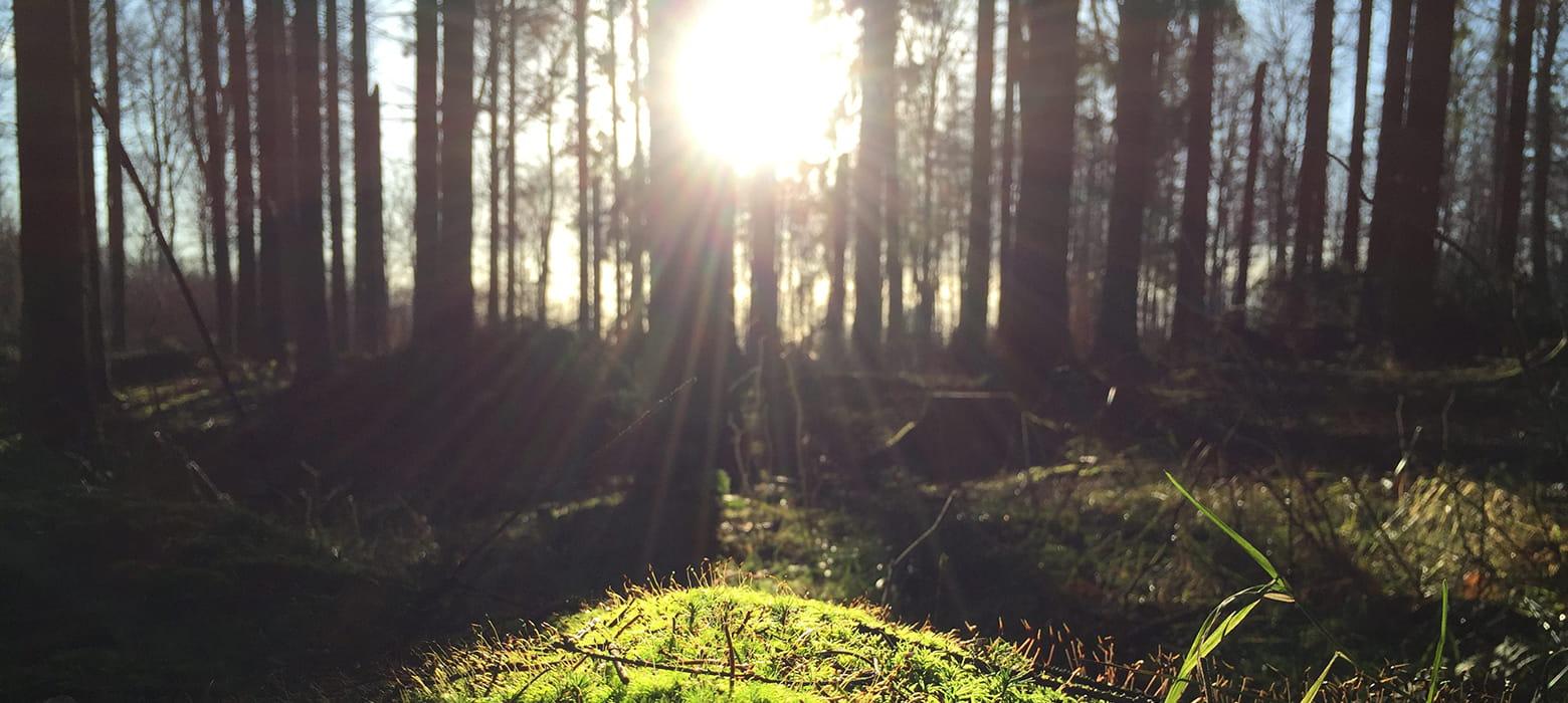 Bosque con reflejo del sol entre las ramas