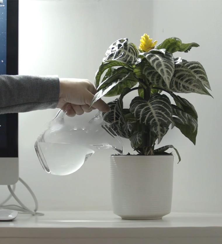 Persona regando una planta