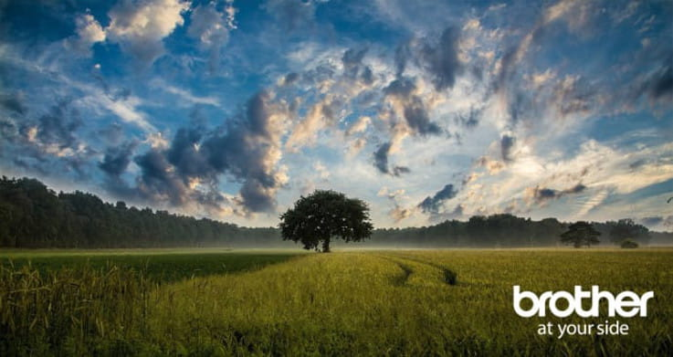 Prado verde con árbol y cielo con nubes de fondo